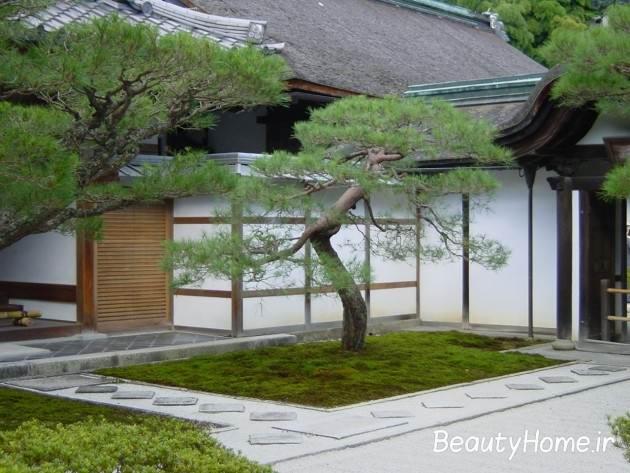 درختان و دکوراسیون فضای باز