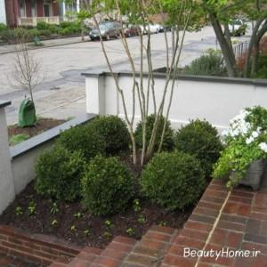 بوته های سبز در زیبایی حیاط