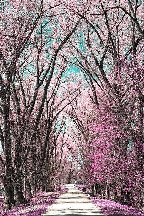 کاغذ دیواری پوستری درختان زیبا
