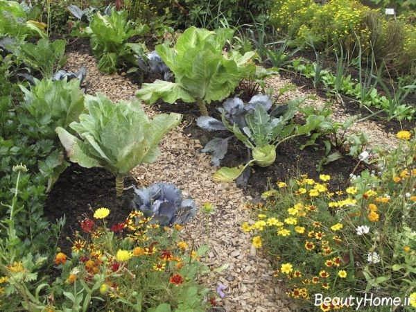 تزیین زیبا باغچه با گل های رنگارنگ