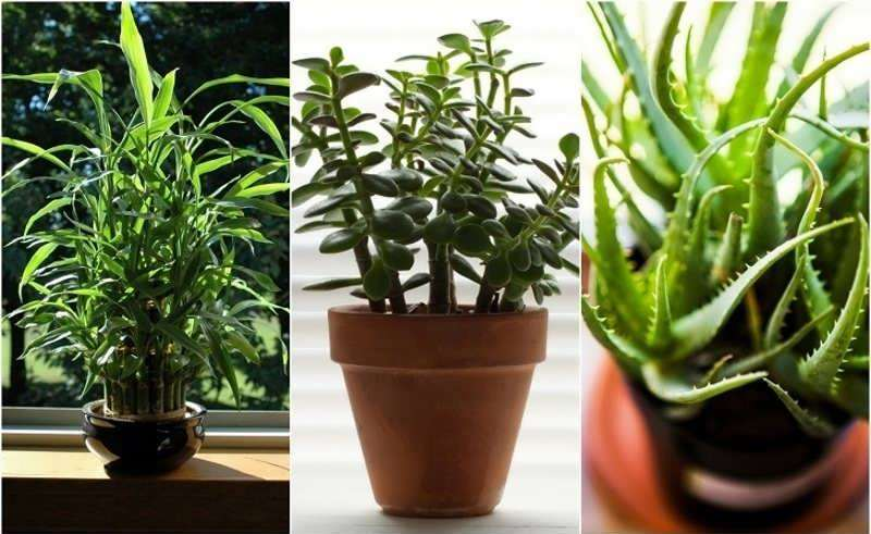 گیاهان مقاوم آپارتمانی