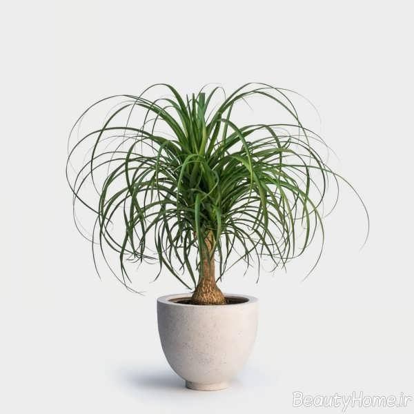 گیاهان مقاوم در برابر کم آبی
