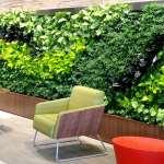 گیاهان مناسب دیوار سبز