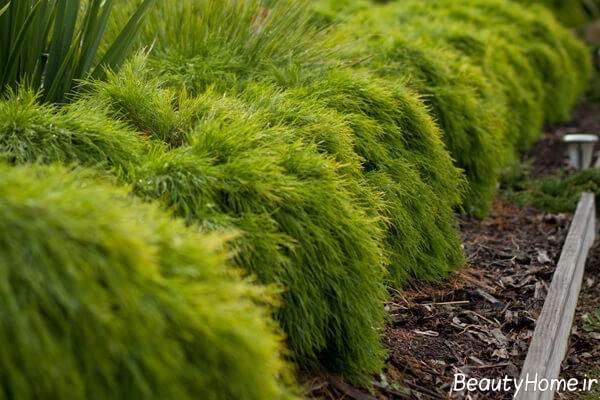 معرفی گیاهان مناسب دیوار سبز