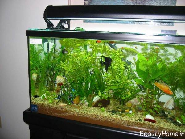 تزیین آکواریوم با گیاهان مصنوعی