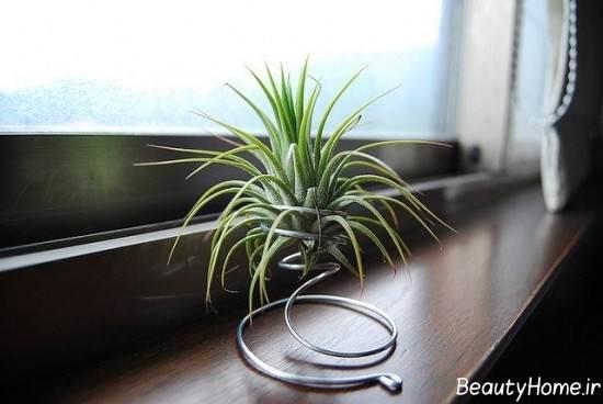 تزیین خانه با گیاهان هوازی زیبا