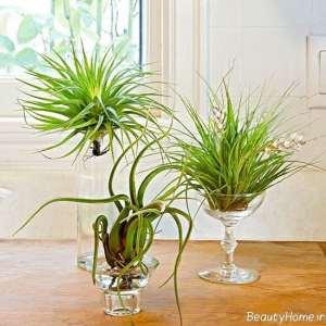 قرار دادن گیاه هوازی درون لیوان