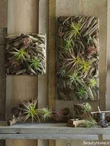 تزیین خانه با گیاهان هوازی