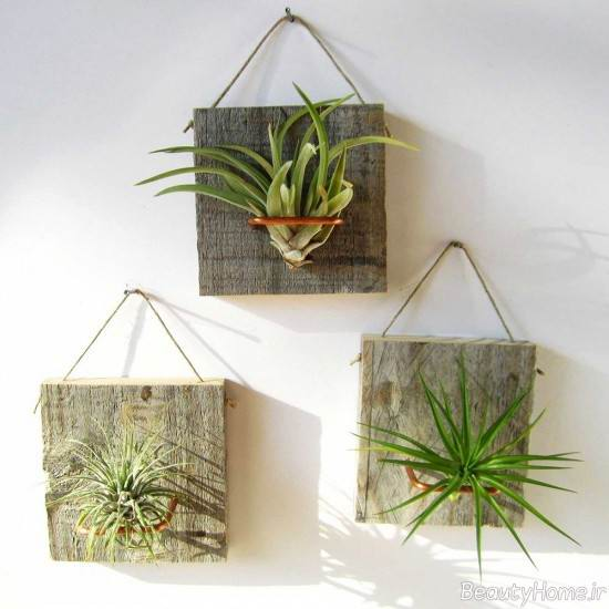 نقش گیاهان هوازی در منزل