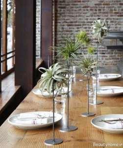 تزیین منزل با گیاه هوازی