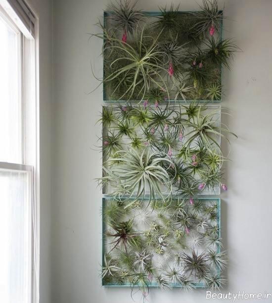 تزیین دیوار با گیاه هوازی