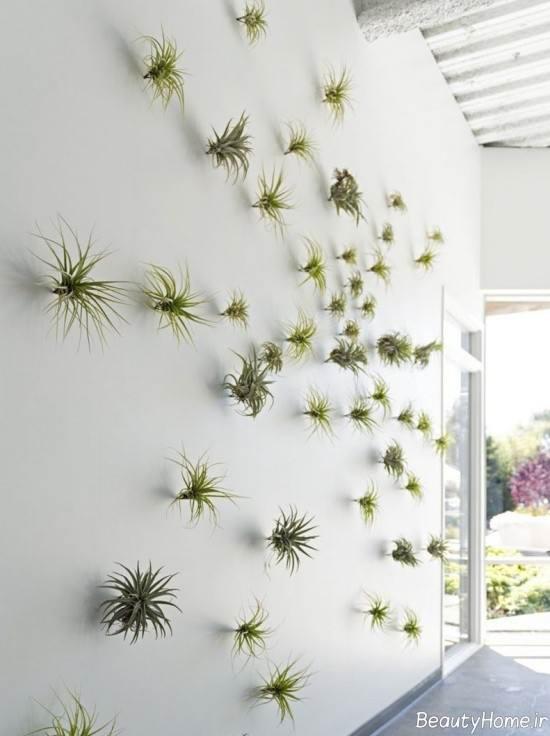 تزیین خاص منزل با گیاه هوازی