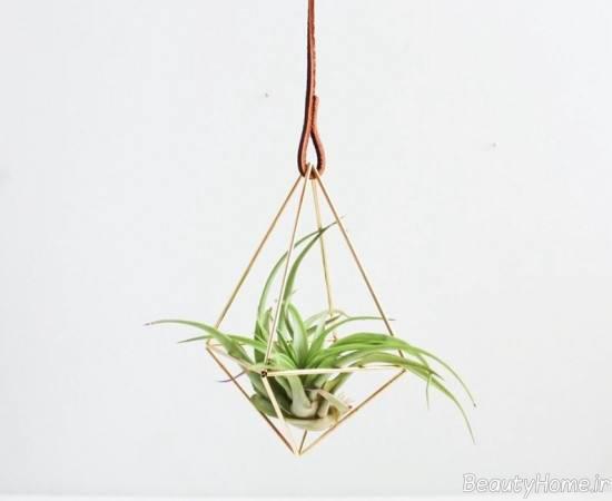 آویزان کردن گیاهان هوازی از سقف