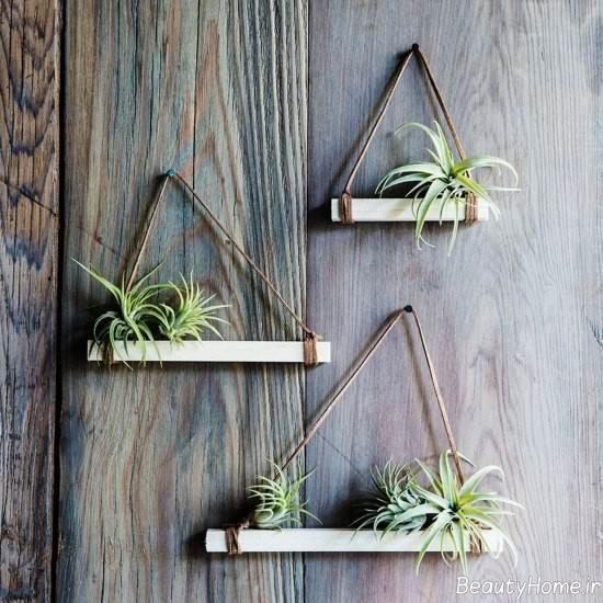 تزیین جالب خانه با گیاه هوازی