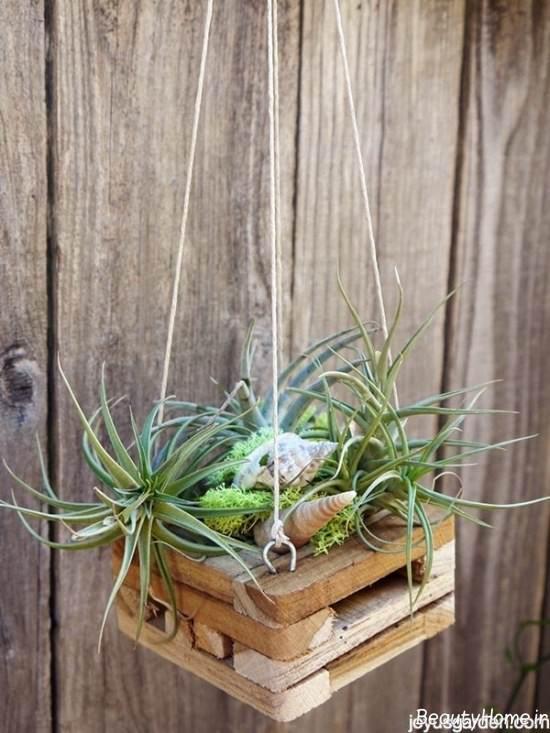 تزیینات منزل با گیاهان هوازی