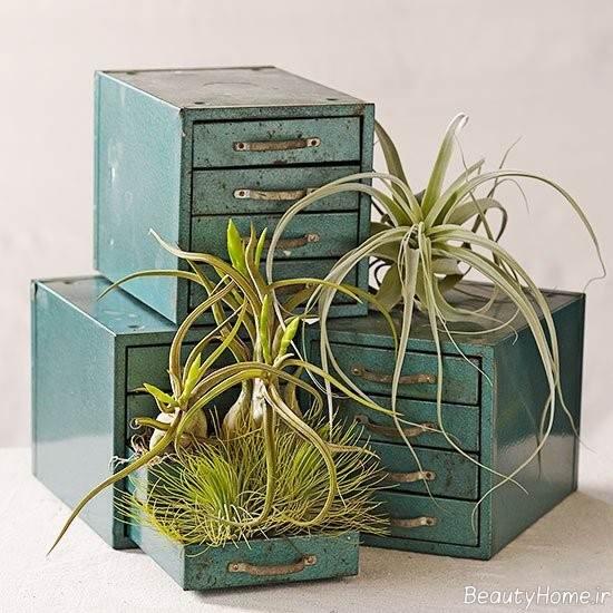 قرار دادن گیاه هوازی در کشو