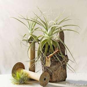 تزیین تنه درخت با گیاهان هوازی