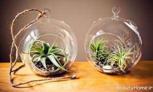 تزیین جالب و ساده خانه با گیاه هوازی