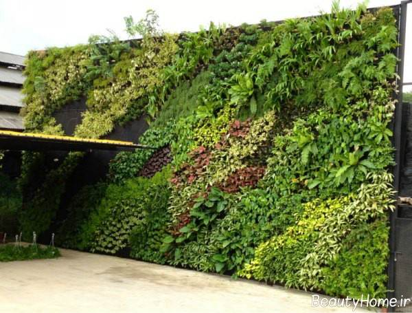 باغچه دیواری حیاط