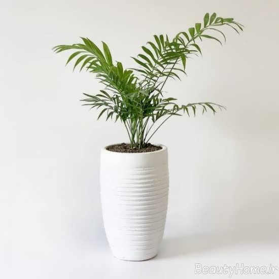 گیاه شامادورا