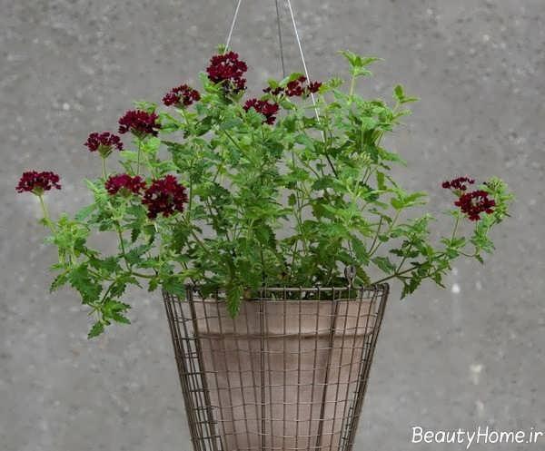 گلدان زیبا و جذاب آویز