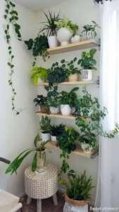 باکس دیواری مخصوص گلدان های کوچک و بزرگ