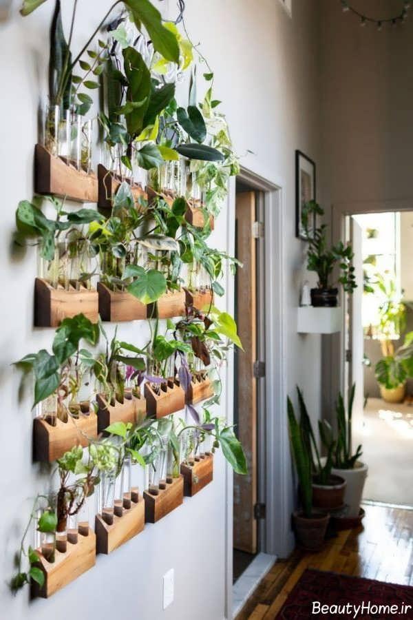 نقش گیاهان در دکوراسیون داخلی خانه