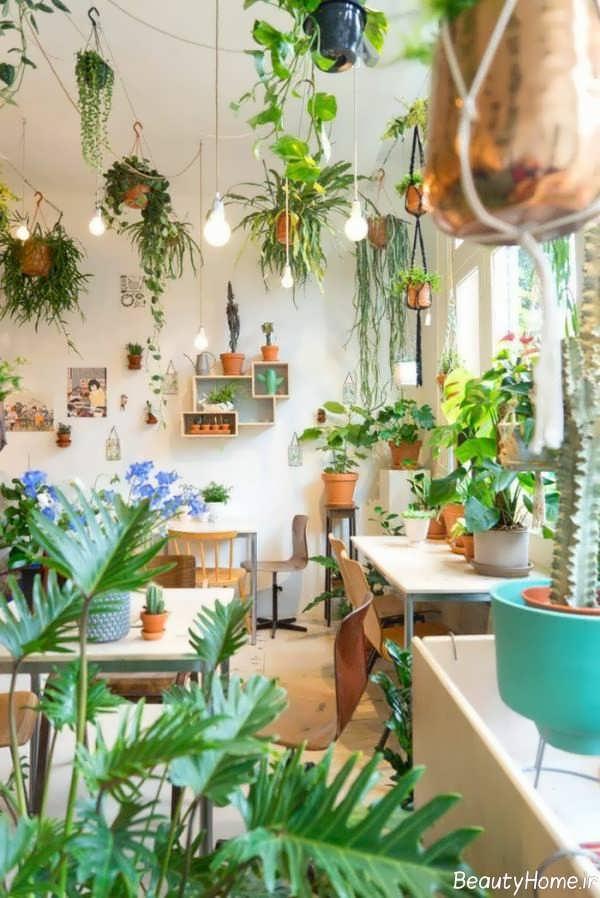 تاثیر انواع گیاهان در دکوراسیون داخلی